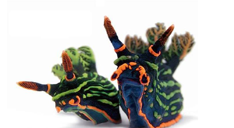 I nudibranchi