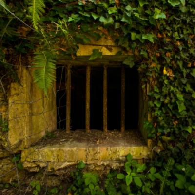 Jardin Agronomie Tropicale mente digitale 1